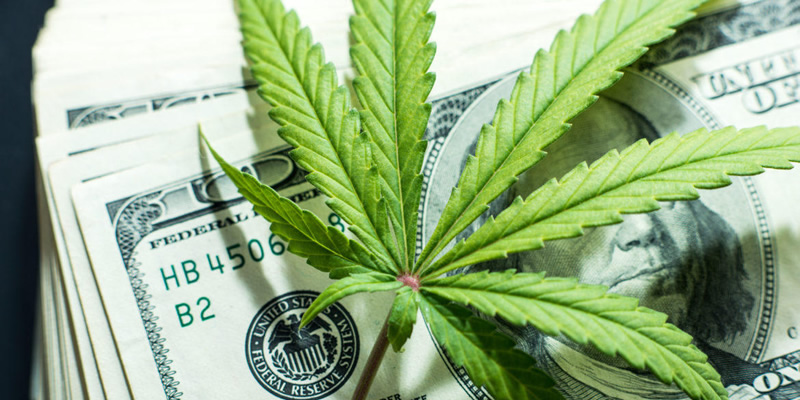 highest paying marijuana jobs