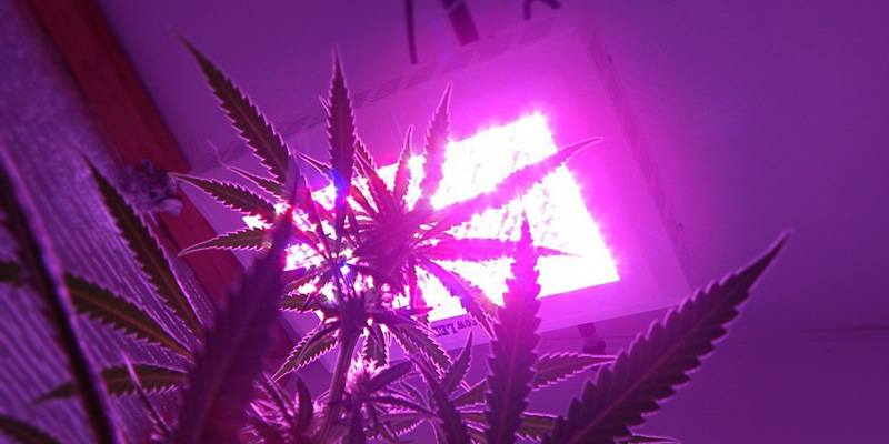 invest in led grow lights