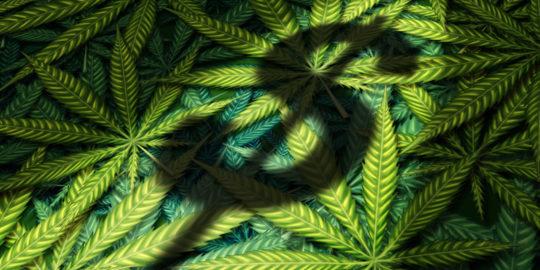 marijuana risks