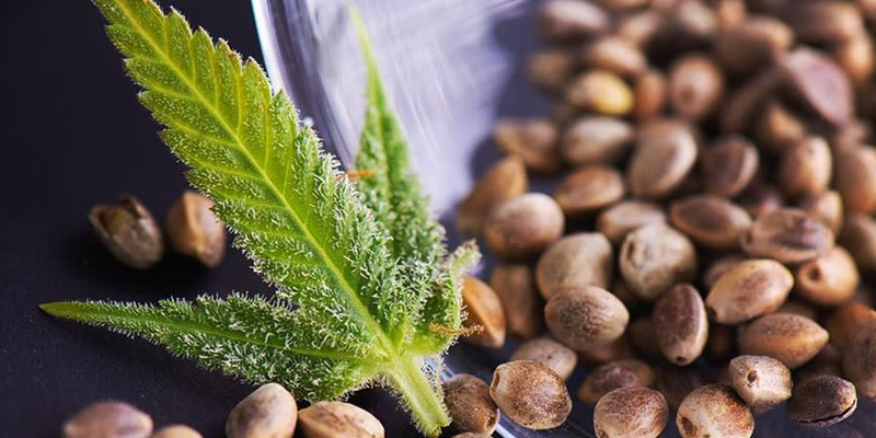 weed seeds to grow