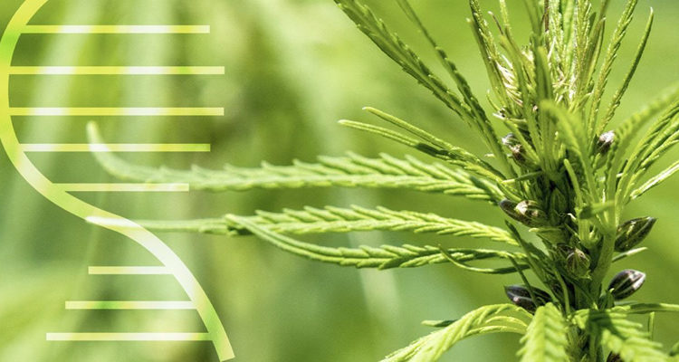 Can Your Genes Dictate If You'll Develop a Marijuana Use Disorder?