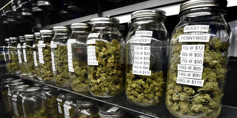 choose marijuana strain
