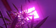 Why Marijuana Growers Should Invest In LED Grow Lights